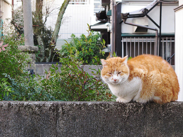 160418_cat88_02