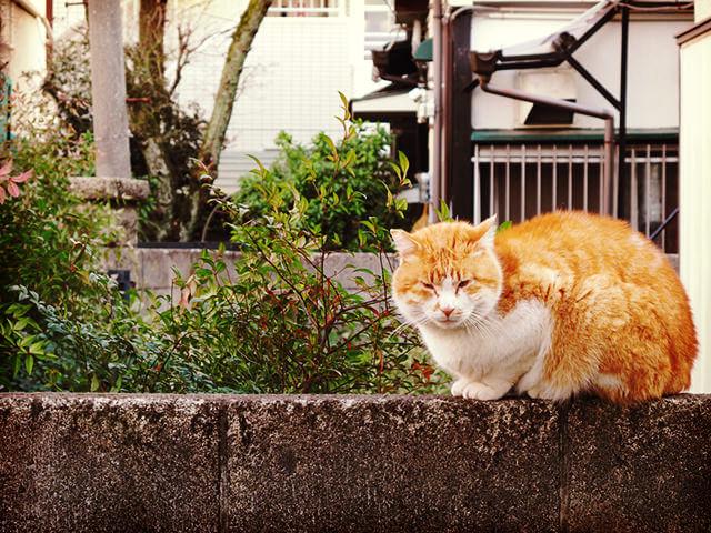 160418_cat88_04