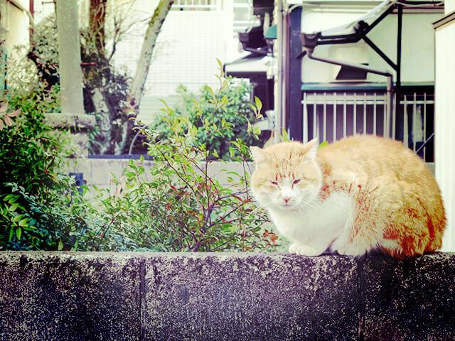 160418_cat88_05