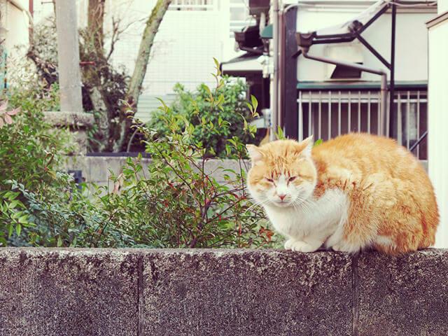 160418_cat88_03